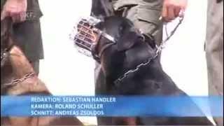 Tv Bericht über Kaisersteinbruch / Ausbildungszentrum Für Militärhunde