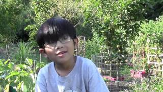 Why Should You Plant Asian Pear Fruit Trees? Backyard Organic Orchard & Gardening Ideas W/aiman
