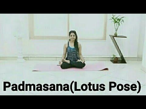 benefits of padmasanalotus pose  youtube