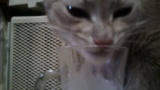 Какой длины язык у кошки?