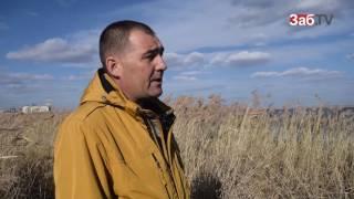 Раненного лебедя оставили замерзать на озере в Краснокаменске