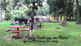Doberman Puppy Off Leash Obedience New Jersey