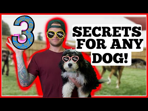 3 Rules for New Dog Owners - Puppy Training Rules for Success