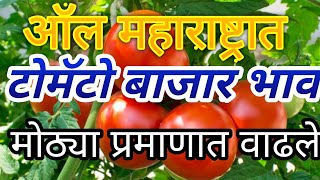 Maharashtra tomato market report/ today tomato rate/ tomato rate in India / tomato rate Mumbai
