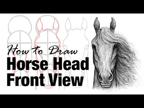 How to draw a horse head front view youtube how to draw a horse head front view sciox Choice Image