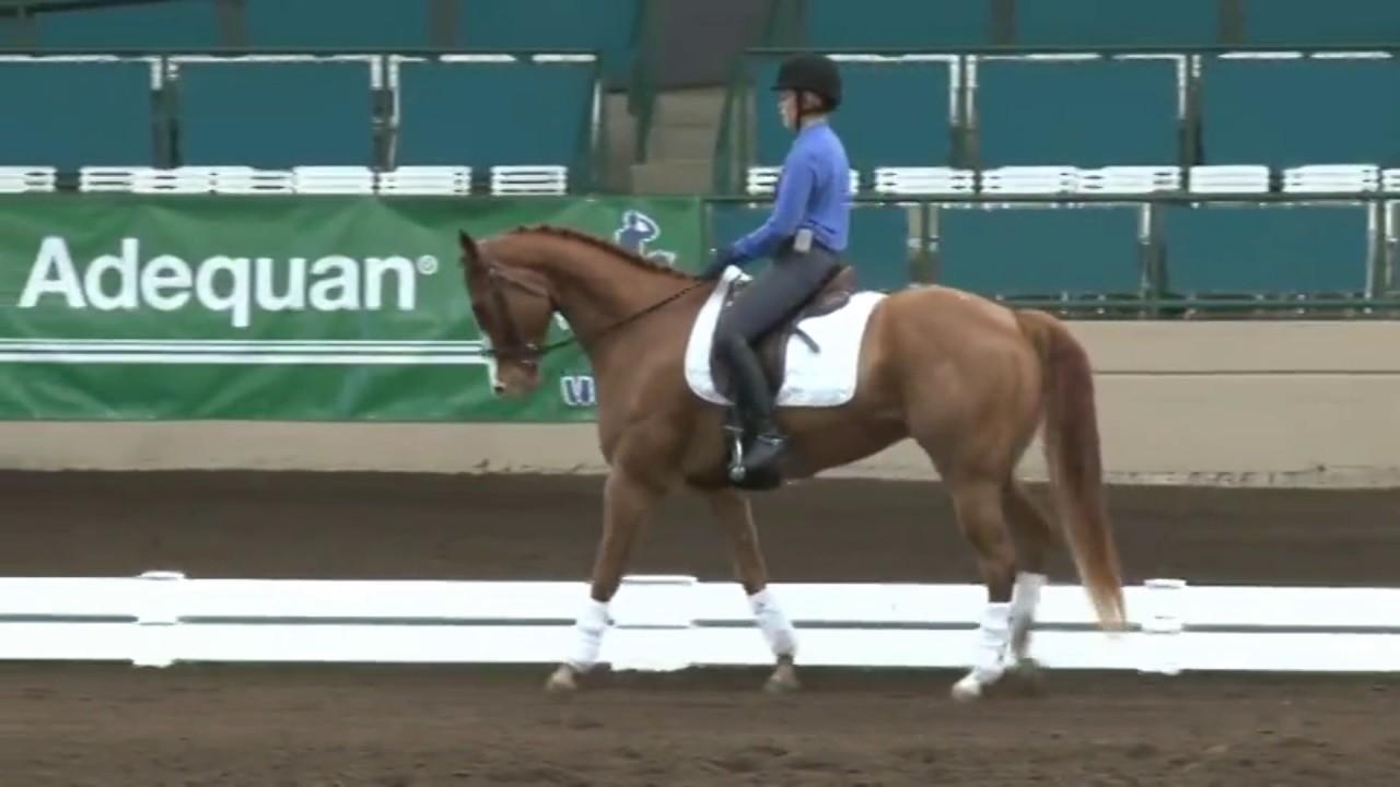 Jeremy Steinberg Can Your Quarter Horse Do Grand Prix Dressage