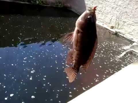 Pescaria No Poço De Peixe Em Casa