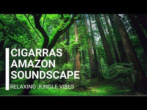 cigarras-amazon-soundscape---relaxing-jungle-vibes
