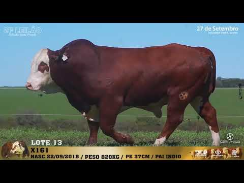 LOTE 013