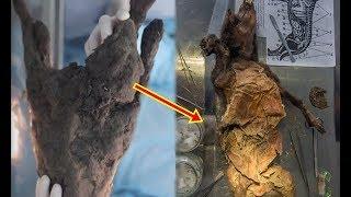 Phát hiện con chó hơn 12.000 năm, vừa mở miệng nhà khoa học bàng hoàng vì thứ còn nguyên bên trong