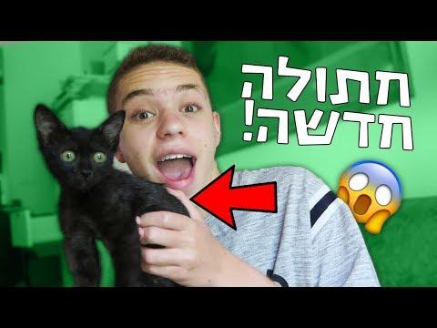 מצאתי חתולה ברחוב!