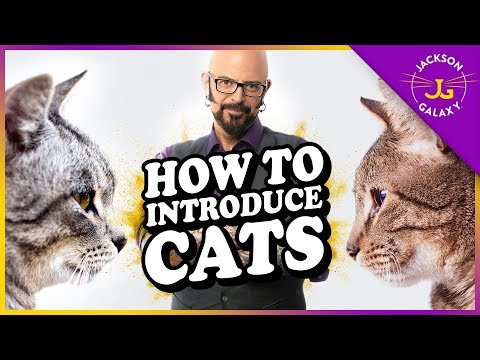 How To Introduce Cats