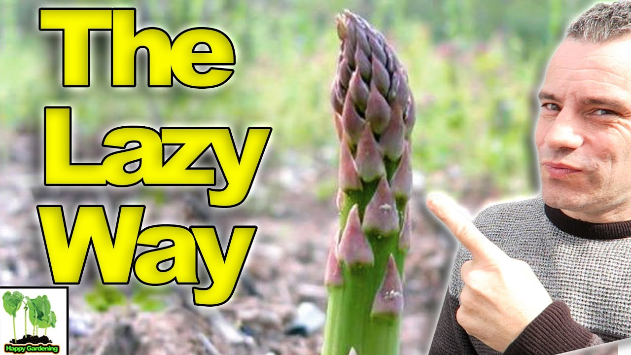 How To Grow Asparagus The Lazy Way Youtube