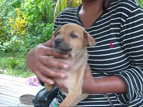 More Puppies And Kittens Given To Good Homes An Expat Philippine Foreigner Lifestyles Video