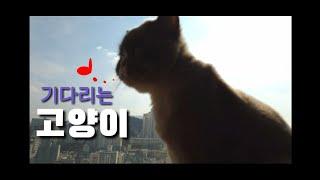 [까까캔디] 고양이 마약 간식   ㅡ마중냥이ㅡ