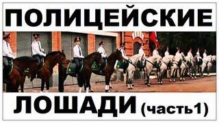 Галилео. Полицейские лошади (часть 1)