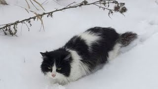 Мороз сковал ее тщедушное тельце, но кошечка не теряла надежду