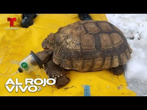 Bomberos rescatan a una docena de tortugas de un incendio en Ohio