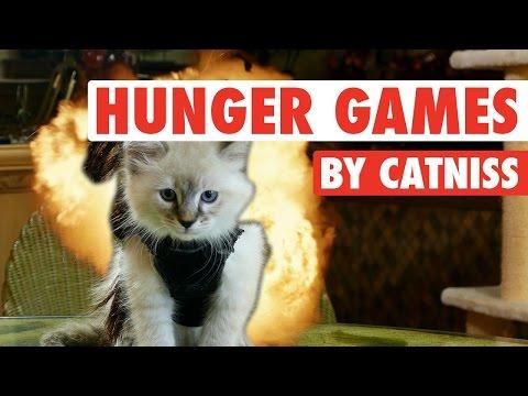Catniss Evpurrdeen, the Kitten on Fire (Hunger Games Cute Kitten Version)