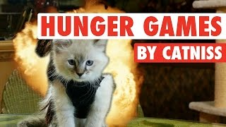 Catniss Evpurrdeen, the Kitten on Fire (Hunger Games Cute Kitten Version)