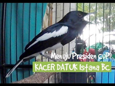PRESIDEN CUP : Aksi Datuk, Kacer Gacor Bardo Istana BC Juara Lintas EO
