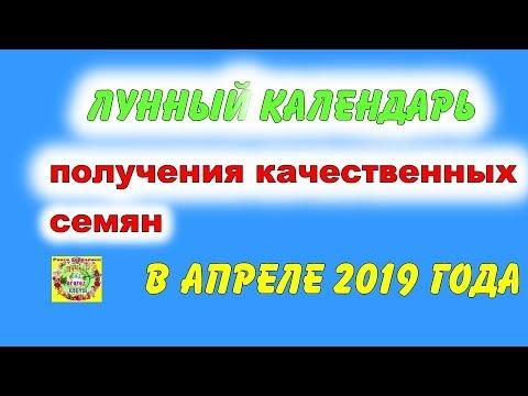 Лунный календарь для получения качественных семян в апреле 2019 года