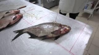 Обучение технологии производства рыбы