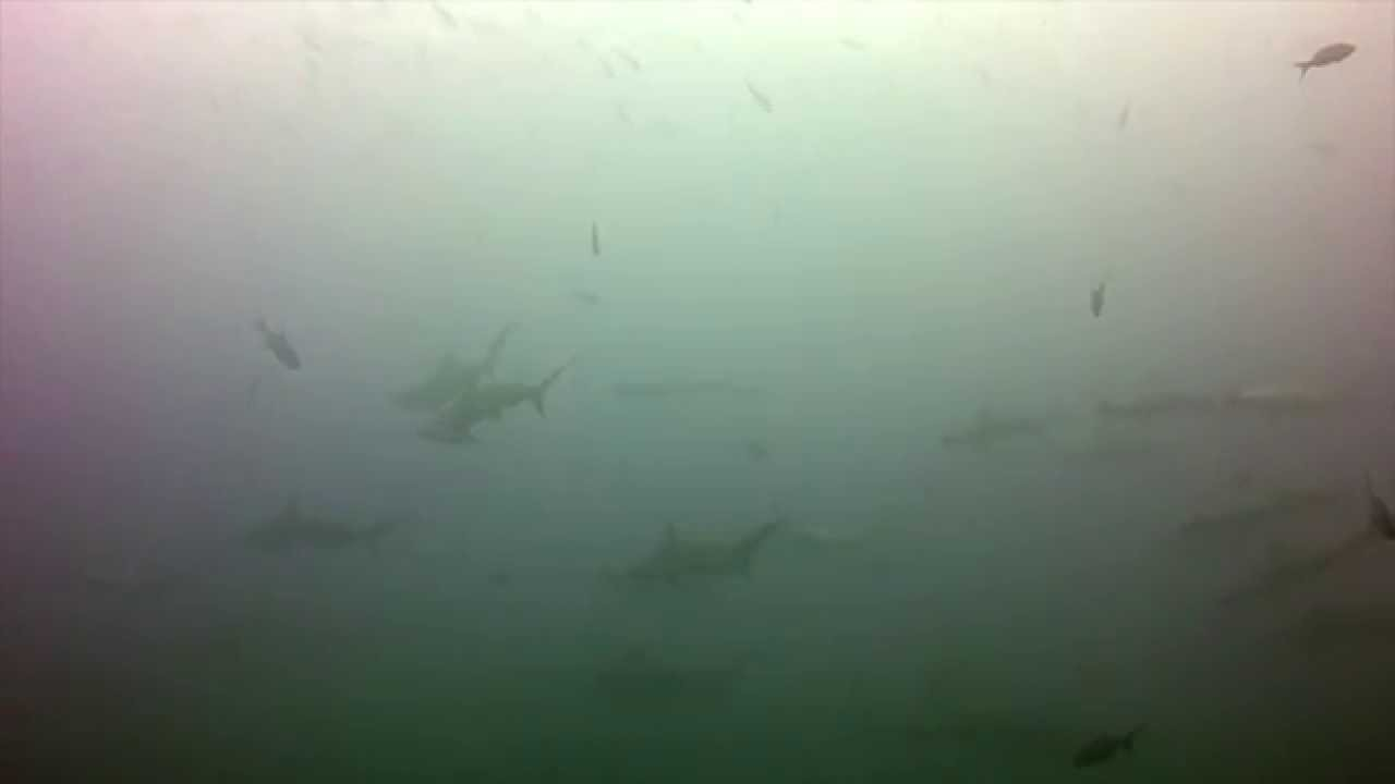 Diving Malpelo Colombia 2015 Youtube