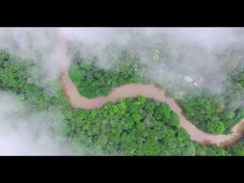 Cuyabeno Wildlife Reserve, Tapir Lodge - Amazon Basin, Ecuador +Drone video South America From Above
