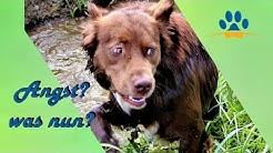 Mein Hund hat Angst❗❗ 6 Tipps für Halter mit ängstlichen Hunden.🐶🐕