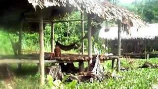 CountryTip: Warao indians