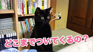 最後まで飼い主に付いてきてくれる忠猫は誰なのか!【猫7匹忠猫選手権!】 thumbnail