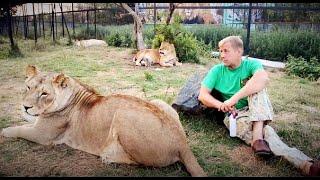 Самая взрослая львица Саванны РОДИЛА ! Клеопатра стала мамой в 25 лет !!!