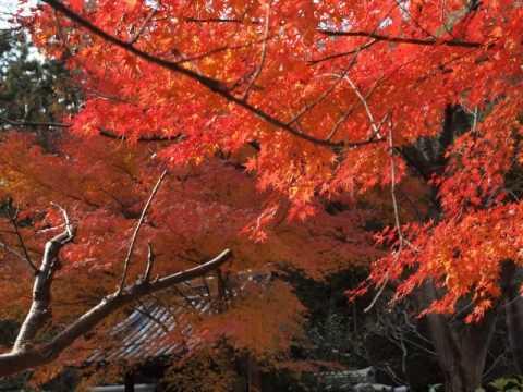 -Yokohama Sankeien Garden-music by Fujimaru.Yoshino