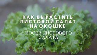Листовой салат на окошке!