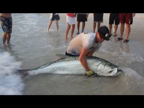 Big Game Fishing From Shore