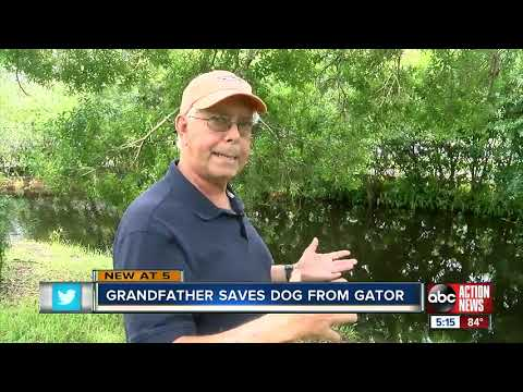 Kevin Campbell - 75 Year Old Florida Man Fights Off Alligator To Save Dog