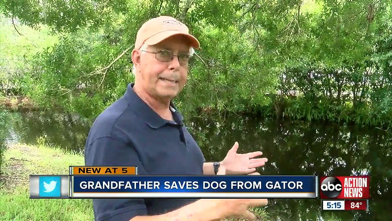 75-year-old Florida man fights off alligator, saves dog