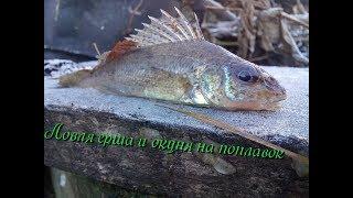 Как ловить ерша и окуня?Топ 5 причин ловить ерша. Моя рыболовная традиция.