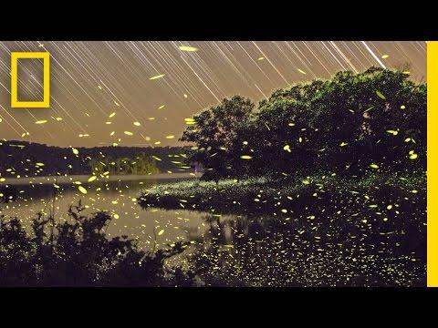 Enchanting Fireflies Paint the Sky | Short Film Showcase