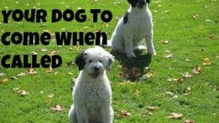 Dog Training Basics How To Train Your Dog To Come When You Call