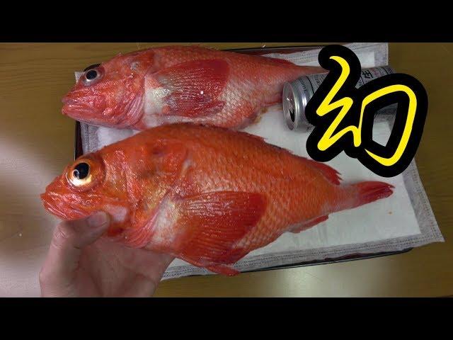 【1匹数万円】全身あぶらまみれの幻の高級魚のさばき方、食べ方はこちらです【巨大キンキ】