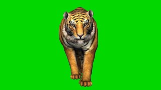 Green screen Tiger walking || green screen tiger running||green screen tiger effect|| green screen||