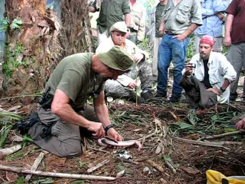 Survival Training In The Florida Everglades Youtube
