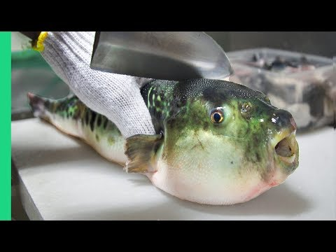 Eating Japans POISONOUS PufferFish!!! ALMOST DIED!!! *Ambulance*