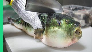 Eating Japan's POISONOUS PufferFish!!! ALMOST DIED!!! *Ambulance* thumbnail