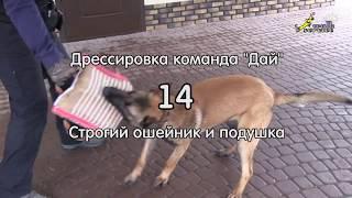Команда Дай #14, строгач и подушка, дрессировка собак, ОКД