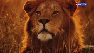 видео Топ 10 самых известных национальных парков в США