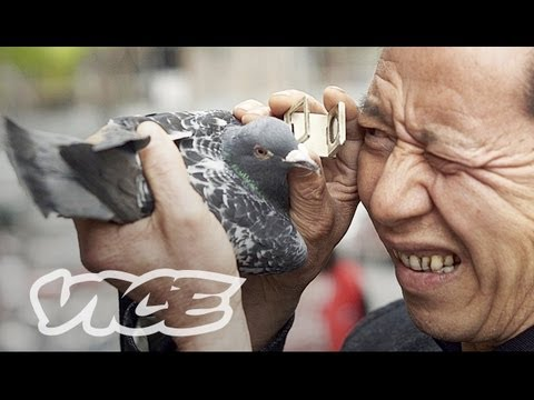 China's Millionaire Pigeon Racers (Full Length)