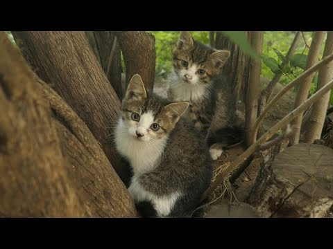 Little kittens live under bushes and hissing at me